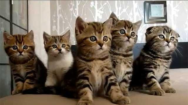 <center><b>Блогер протестировал кошачью еду</center></b>