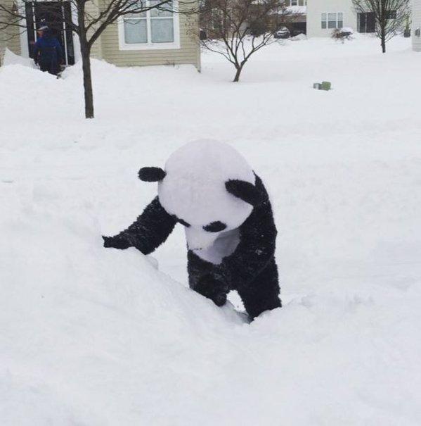 <center><b>Американец мечтает об успехе панды</center></b>