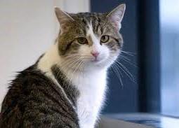 <center><b>Британский кот Ларри сохранил работу</center></b>
