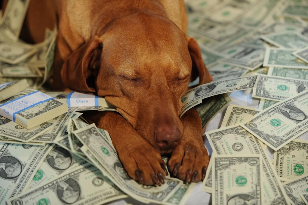 Туристы потеряли собачку на миллион