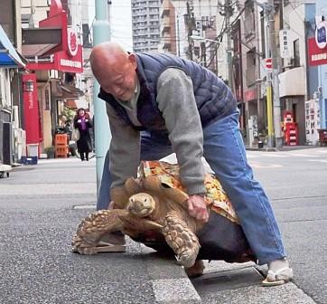 Японец выгуливает гигантскую черепаху (видео)