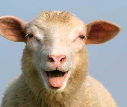 <center><b>Глупая овца застряла в заборе</center></b>