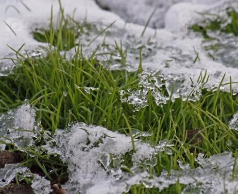 В Москве косили траву под снегом