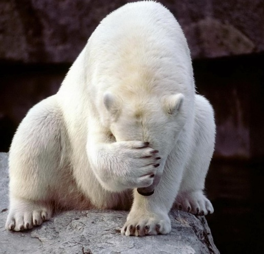 Депутат оделась белым медведем