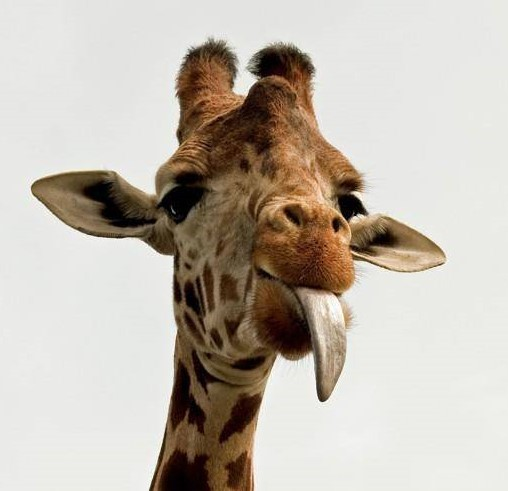 Селфи-палка для жирафов