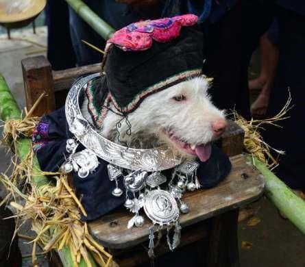 В Китае с почестями прошел День ношения пса