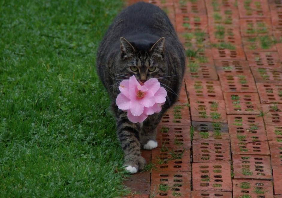 Самая романтичная кошка в мире