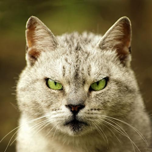 <center><b>Британского кота обвинили в шпионаже</center></b>