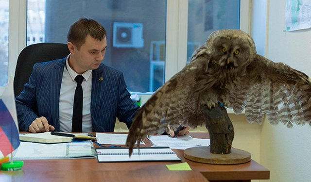 В кабинете чиновника нашли чучело редкой совы