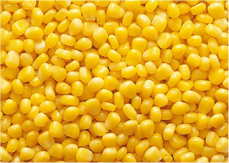 <center><b>Американец вывел радужную кукурузу</center></b>