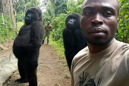 Африканец нашёл фотогеничных горилл