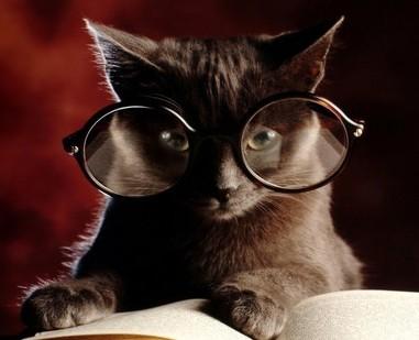 <center><b>Кот Ученый не дочитал тотальный диктант</center></b>