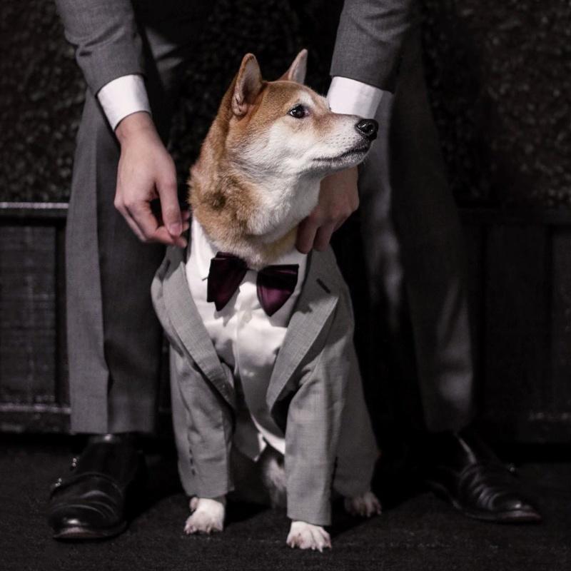 <center><b>Собака в мужской одежде стала звездой Instagram</center></b>