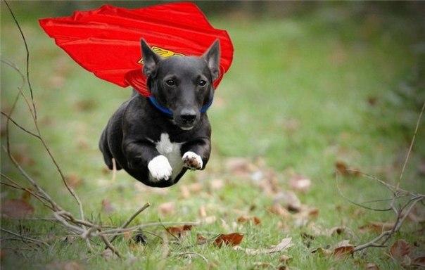 <center><b>Собак научили летать</center></b>