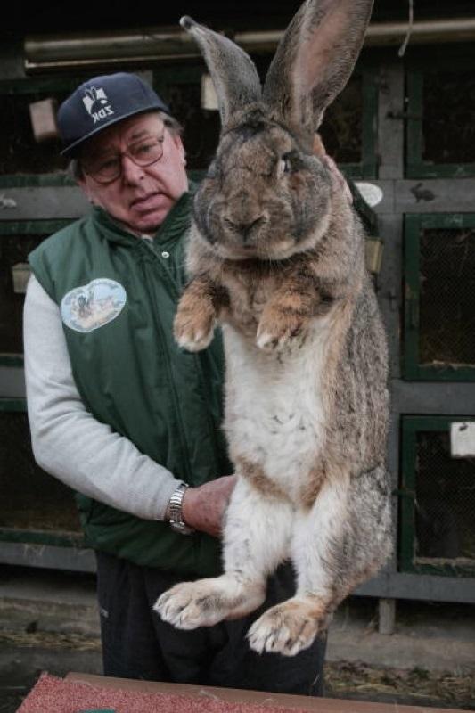 <center><b>Найден самый большой кролик</center></b>
